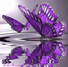 to start the day mesmerizing butterflies it is what it is