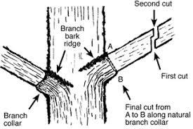 hgic 1003 pruning trees extension clemson south