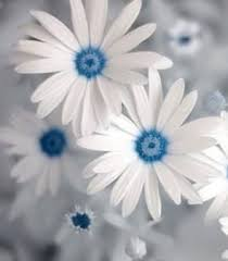 white and blue flowers 691 best flowers images on beautiful flowers pretty