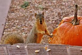 squirrel pumpkin fun u2013 halloween special websquirrel u0027s lolz