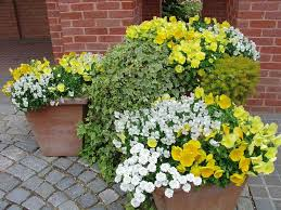 Plant Combination Ideas For Container Gardens - container garden ideas container gardening plants and gardens