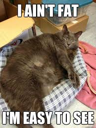 Crazy Cat Memes - my moxie makes this cat seem rather slim really funny quotes