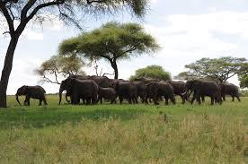 safari tarangire national park safari junkie