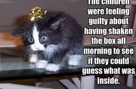 Funny Cat Birthday Meme - birthday meme funny cat kitten s wallpapers litle pups