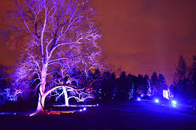 tree light show at morton arboretum coronado