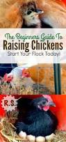 651 best chickens images on pinterest backyard chickens keeping