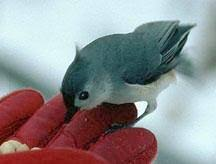 Ontario Backyard Birds Backyard Bird Feeding In Windsor Ontario