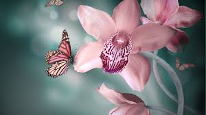 flowers orchid pink butterflies butterfly flowers orchids flower hd