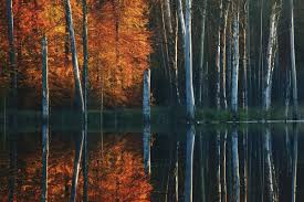 Digital Photography Photography Autumn At The Lake Series