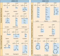 Ap Physics C Reference Table Introduction To Proteins And Amino Acids Article Khan Academy