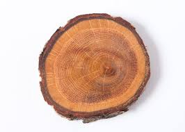 wood disk rustic oak wood discs with linseed oak tree coasters for
