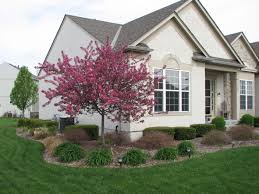 trees for landscaping beautiful home design ideas