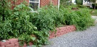 raised bed gardening faq today u0027s homeowner