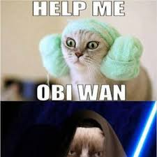 Star Wars Cat Meme - star wars grumpy cat grumpy cat cat and animal