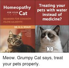 No Meme Grumpy Cat - 25 best memes about grumpy cat says no grumpy cat says no memes