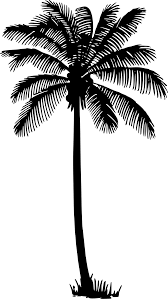 pin by hannah jensen on b u0026n ideas pinterest palm tree