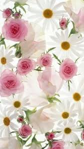 Cosmos Flower Essence - cosmos flower to help with focus of thoughts flower essences