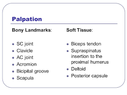 Palpate Supraspinatus Tendon Guide To Diagnosis And Conservative Treatment Ppt Video Online
