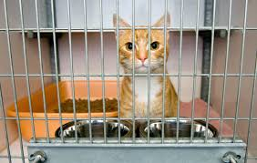 adopt for free archives vip petcare