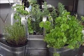 Indoor Herb Garden Light Complete Guide On How To Grow An Indoor Herb Garden