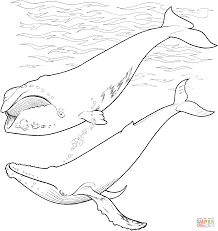 antarctic animals coloring pages free printable pictures