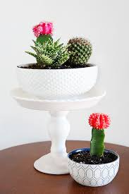 cute succulents cactus and succulent gift ideas succulent gifts kitchen dishes