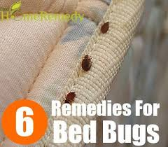 Bean Leaves Bed Bugs 6 Home Remedies For Removing Bed Bugs Natural Treatments U0026 Cure