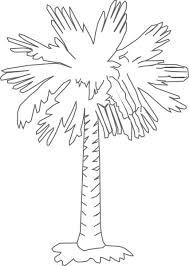 drawn palm tree palmetto tree pencil and in color drawn palm