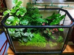 indoor herb garden terrarium gardening ideas