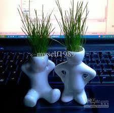 pour mon bureau 8 best une plante pour mon bureau images on plants