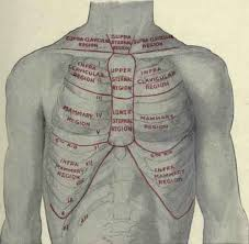 the regions of the chest