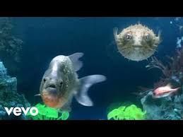 download mp3 from brothers muzik salmon songs mp3 download