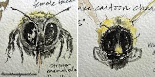 sketching the carpenter bee u2014 scratchmade journal