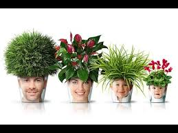 Trees Plants And Flowers - creative artificial plants trees and flowers and wholesaler in