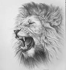 25 unique lion drawing ideas on pinterest lion art lion head