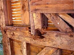 Powder Post Beetles In Hardwood Floors - powder post beetles massachusetts home inspections