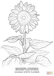 kansas state flower coloring page free printable coloring pages
