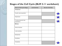 28 51 the cell cycle study guide answers 133276 sci 9