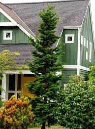 Best Trees For Backyard by 47 Best Trees For Backyard Images On Pinterest Plant Catalogs