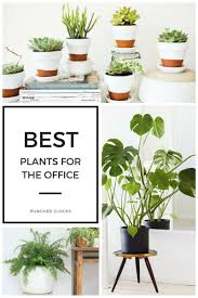 best plant for office 12 best plants for the office punched clocks
