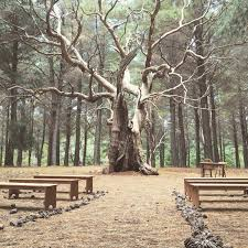 magical wedding ceremony setup we did at kuitpo forest south