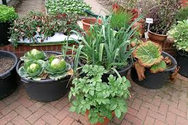 Types Of Vegetables To Grow In A Garden - vegetables in containers rhs gardening