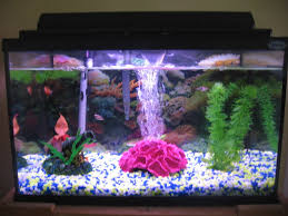 begginer fish tank 10 steps