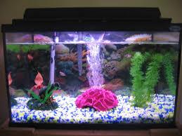 Aquarium Decoration Ideas Freshwater Begginer Fish Tank 10 Steps