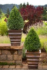 potted trees and shrubs article with helpful tips most