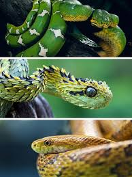 a green snake wallpapers deadliest snakes wallpapers u0026 pictures collection on the app store
