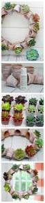 12 clever diy succulent planter projects
