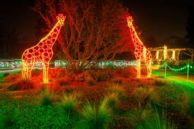 Lights At The Zoo by Zoolights Fresno Chaffee Zoo