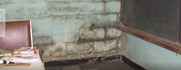 basement u0026 crawl space mold cleanup services alabama southerndry