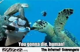 Turtle Meme - sea turtle meme pmslweb
